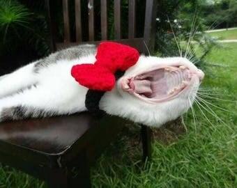 Custom cat helmet