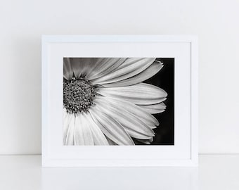 Gerbera Daisy - Flowers - Fine Art Photography Print