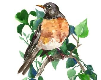 American Robin, Original watercolor painting, 12 x 9 in, watercolor bird art, orange green bird painting, ronbin art, berries and birds