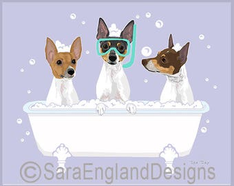 Spa Day - Toy Fox Terrier