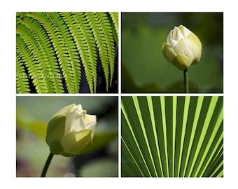 Nature Print Set, Lotus Flower Wall Art, Green Photography, Zen Decor for Home