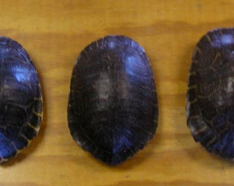3 Large River Cooter Turtle Shells
