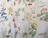 Nature Notes of an Edwardian Lady - 5 Pages - Cards - Scrapbook - Bunting - Confetti - Smash Books - Junk Journal - Collage