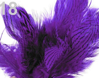 18 - Purple striped feathers 4 to 12 cm