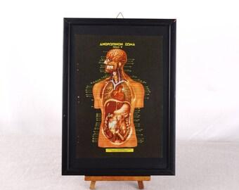 Human Anatomy Poster, Anatomy Art, Biology Print, Anatomy Gift, Human Body Print, Medical Poster, Anatomy Gift, Medical Print, Medical Decor