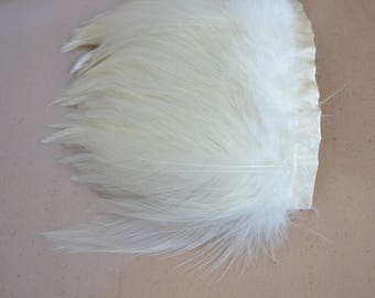 Rooster Hackle Feathers in Cream / Yellowish / Goldish Ivory, 3-Inch Trim - Ships in 1 Business Day