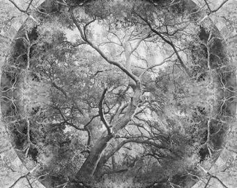 Mandala Tree Photo | Live Oak Tree Art | Surreal Tree | Photo Montage | Black & White Tree Photo | Tree Mandala Art | Abstract Woodland Art