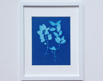 Sister Plants - original cyanotype 8x10