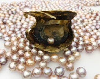 Bulk Pearl Oysters, 2.50 each, WHOLESALE, Oval or Round pearls, pearl oysters, Natural  Color, wish pearl, oyster in pearl