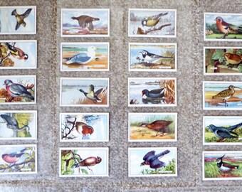 Gallaher Ltd Cigarette cards - British Birds - full set of 48 cards