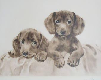 Engraving / German Animal Artist / Kurt Eberhardt / Authentic Early Print found in Antique Portfolio / 2 Dachshund Puppies