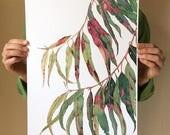 Gum tree print A3 - botanical watercolour print eucalyptus leaves - Australian native wall art - red green foliage