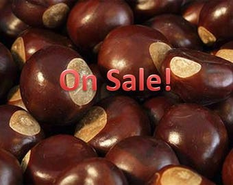 10 Wildcrafted Buckeyes Assorted sizes