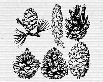 Hand-Drawn Pine Cones, Pine Cones Sketches, Digital Cliparts and Vectors in jpg, png, and eps