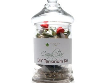 Candy Jar Terrarium Kit DIY