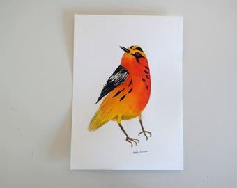 Orange bird - Original watercolour