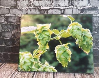 Hops vine canvas photo - hops photo - beer lover gifts - craft brewer -  bar decor - restaurant decor - craft brewer gift - hops art