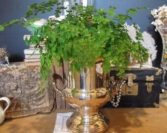 Vintage Silver Plate Champagne Bucket / Monogrammed Ice Bucket / Detailed Handles / Elegant Plant Holder / Wine Cooler