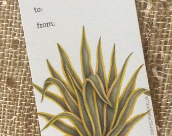 Variegated Agave Gift Tags: Set of 3