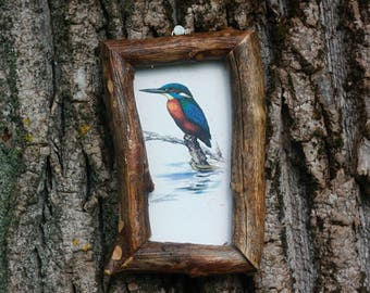 Bird art print Wood frame Bird picture Kingfisher picture Antique vintage illustration Wooden rustic decoration Nature art Raw wood