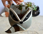 Tiny wall raccoon ceramic planter (succulent plant not included)