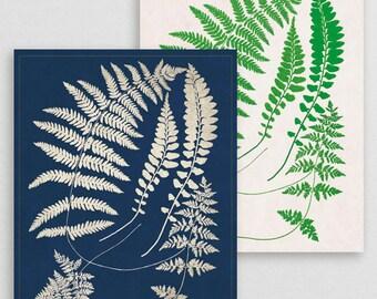 Classic Fern XV- Botanical Decor- Botanical Gifts- Prints for Decor- Botanical Art- Ferns- Nature -Vintage -Vintage Prints -Vintage Art
