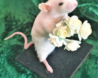 Taxidermy Bouquet Mouse - weird, curio, romance, rose , oddities, curiosities, goth, home decor, gift
