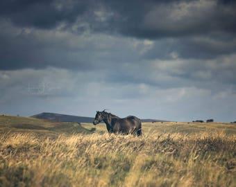 Dartmoor Pony Photograph   Blue Print   Landscape Print   Equine Fine Art Print   Horse Photography   Dartmoor