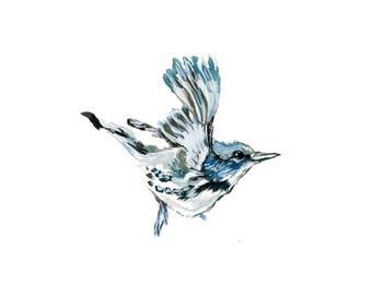 Watercolor Cerulean Warbler Inkjet Print