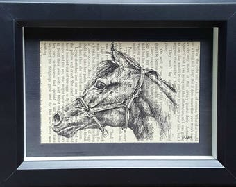 Arab Arabian Horse Pen and Ink Drawing on Vintage Pony Book Page Jinny Shantih
