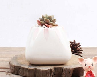 Ceramic Planter for Succulent, Cactus, Air Plants, Succulent Planter, Mini Planter, Ceramic Planter, Ceramic Pot, Mini Pot