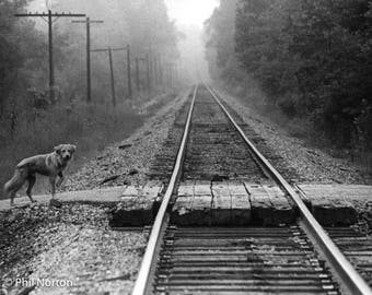 Dog Tracks is a scene out of the coal and oil and train state of Pennsylvania, tracks passing through every small town and countryside, 1975
