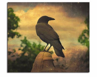 Retro Sky, Nature Photograph, Crow Art Image, Raven Print, Aged Art Print, Blackbird Chilling - Zen Of Crow