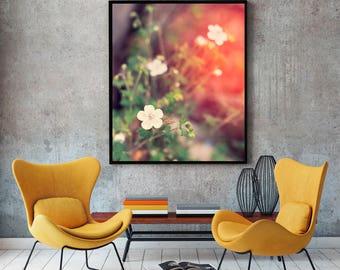 White Flower Fine Art Print, Desert Wildflower, Dreamy Flowers, Nursery Art, Wedding Gift, Gift for Her, Pink Photography, Utah Nature