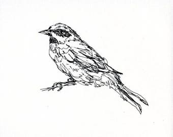 Sketchbook Sale - Bird #31 Original Ink Line Drawing - 8x10 Songbird Original Art