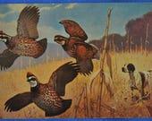 Art Flushed Quail Bird Hunting Hound Dog Lynn Bogue Hunt Postcard