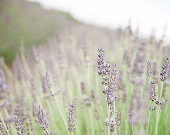 Spring Art, Floral Art, Square Artwork, Floral, Flowers, Farmhouse Art, Farmhouse Decor, Lavender, Beach House Art, Square Artwork, Purple