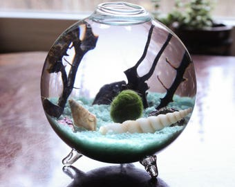 Marimo Terrarium Kit - Miniature footed aquarium with living Japanese moss ball, sand, pebbles, sea shells and sea fan