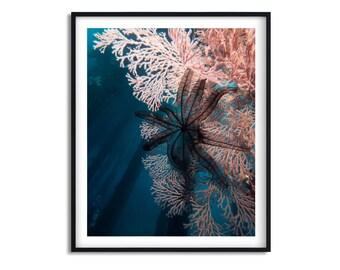 Crinoid and coral underwater photo | Framed art print | 8x10 | 11 x14 | 16x20 | 20 x30| Home Decor | Beach house decor | Pink | Blue | Black