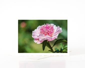 Herbaceous Pink Peony Flower Cards, Blank Photo Greeting Cards, Flower Photo Note Card Sets, Nature Photography Cards Prints