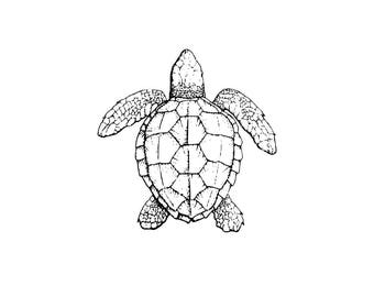 Sea Turtle SVG and PNG Digital Download - sea turtle graphic - digital download sea turtle vector silhouette