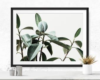 Botanical photography, Plant photography, Botanical print, Large photography, Download printable, Botanical download, Botanical art print