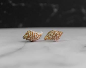 Natural Seashell Cufflinks