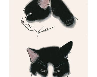Tuxedo Cat Art - Study for two cats -   4 X 6 black and white cat print - 4 for 3 SALE