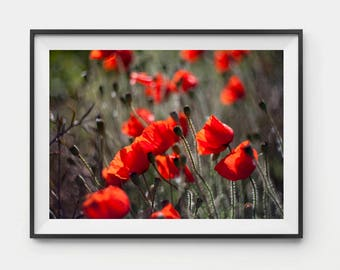 Poppy print, Red Poppies wall art, Poppy art, Poppy Home Decor, Poppies Art, Poppies Artwork, Poppy Art, Poppy decor, Home Decor gift, Print