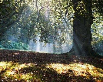 Autumn Gold - Fine art photography print