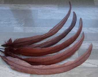 Set of 5 Brown Rooster tail feathers