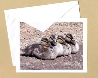 Mallard Ducklings Photo Greeting Card