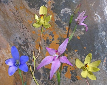 Coasters Meelup Orchids with Rock, Orchid coasters, floral coasters, native flora.