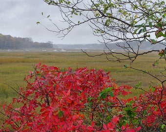 Autumn color on a rainy day, North River, Scituate, MA, South Shore, New England, Massachusetts, cottage decor, archival print, signed